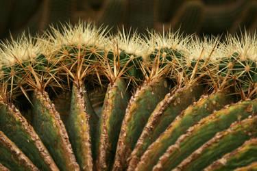 old cactus with kidies by Nexu4