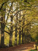 autumn path by Nexu4