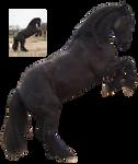 friesian rearing 2 black horse precut png stock by Nexu4