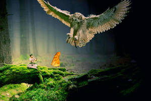 the owl, the boy and the butterfly by ryApache