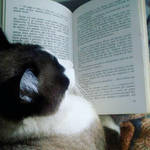 Cat reading, with all sincerity by Renan23900