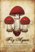 Fly Agaric by turp
