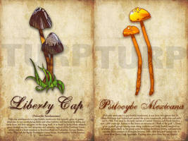 Liberty Cap-Psilocybe Mexicana by turp