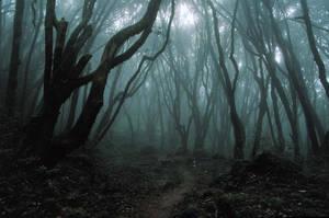 Dark Forest RESIZED by reckinyards