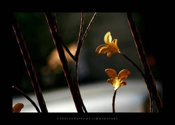 Golden Leaf by couleur