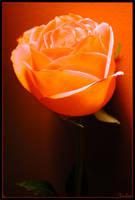 Orange:1 by jochra