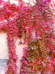 red leaves by compot-stock