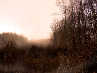 foggy forest by compot-stock