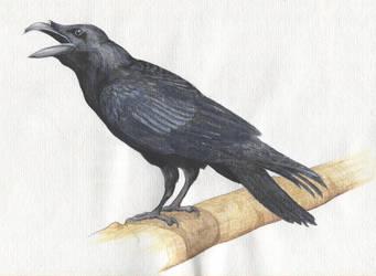 Raven by niemandswort