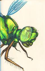 Dragonfly by niemandswort