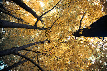 Falling in love with Autumn by dallasgutauckis