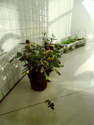 Flower by AncesTTraL