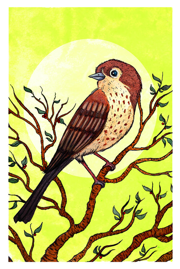 Sparrow by Gytrash01