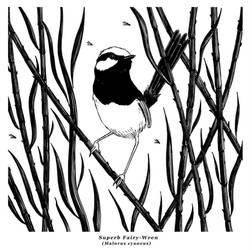 Ink - Fairy Wren by Gytrash01