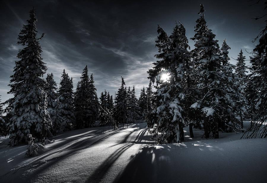 Winter Magic by Tayterleek