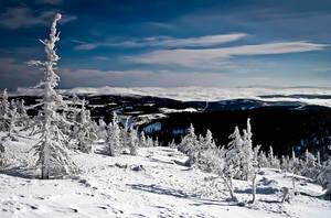 Winter by Tayterleek