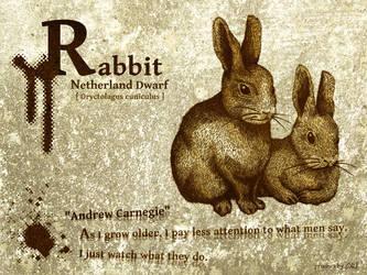 Netherland Dwarf - rabbit by chills-lab