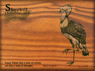 Shoebill by chills-lab