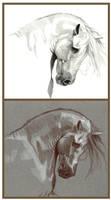 _Horse Tone Study_ by Aikya