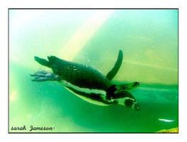 Penguin. by sariefairie