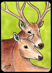 ATC Pere David's deer by Haawan