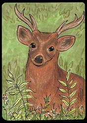 ATC Hog deer by Haawan