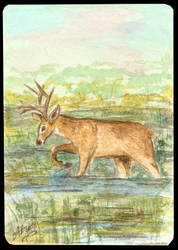 ATC Marsh deer by Haawan