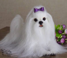 Needle Felted Maltese by YuliaLeonovich