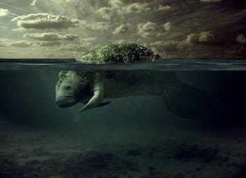 Manatee Underwater by abvott