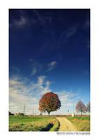 Late Autumn III by MCG0603