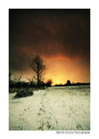 Snowy Rheingau II by MCG0603