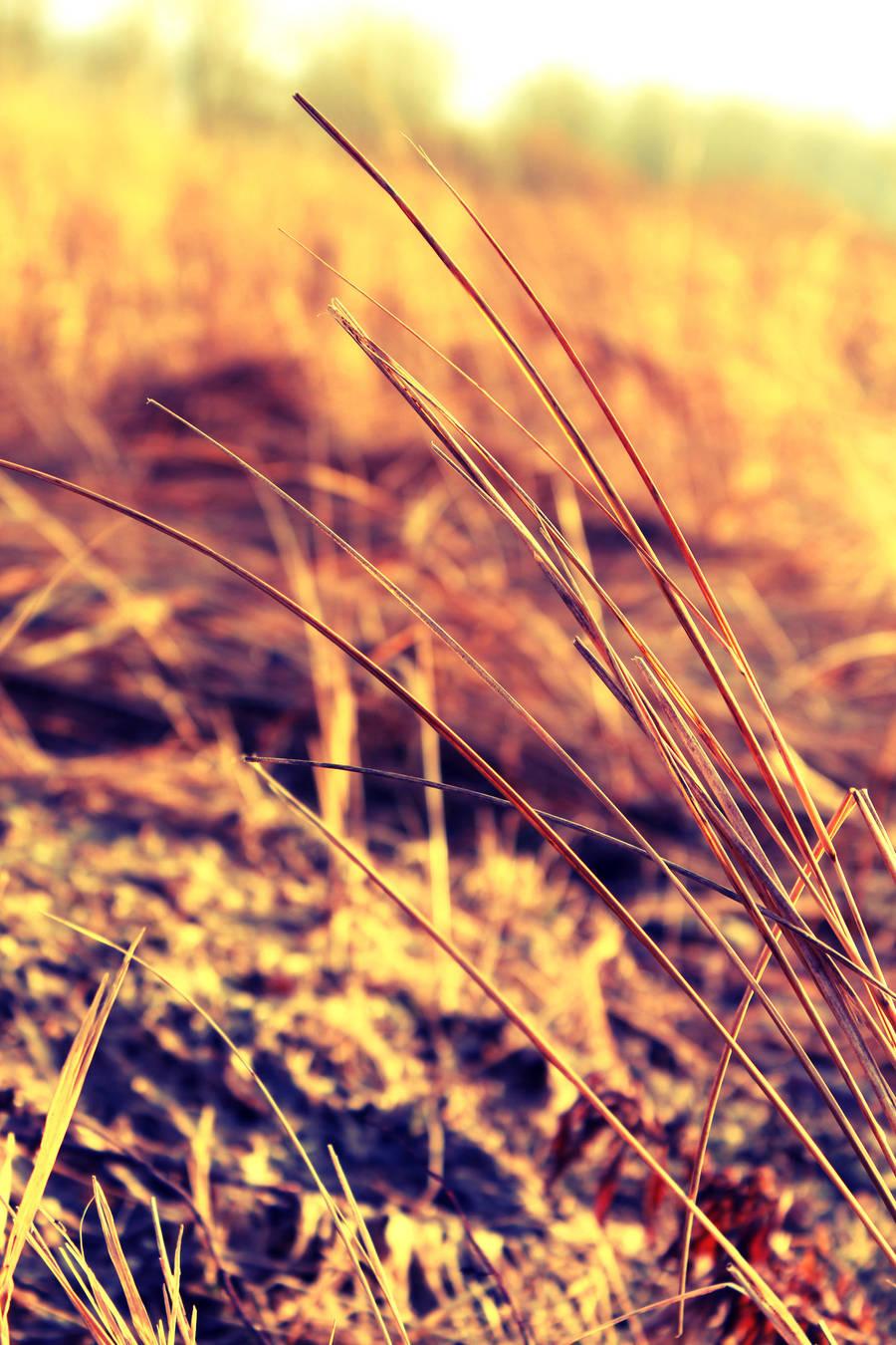 Autumn field by xposedbones