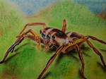 Itsy Bitsy Spider (order) by Rutheck