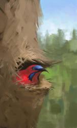 Sunbird by EthicallyChallenged