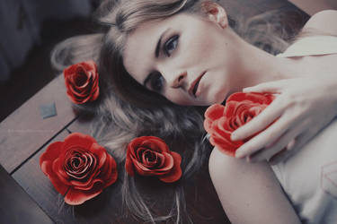 red roses by Basistka