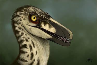 velociraptor portrait - jp3 female by tnilab-ekneb121