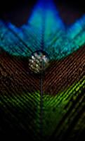 Symmetrical Flaw by ShutterBug97