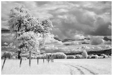 Oak Island - IR by junkster78