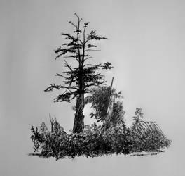 Dead Tree by TomKilbane