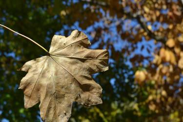 Falling leaf by TomKilbane
