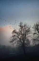 Hidden Mist by vesaspring