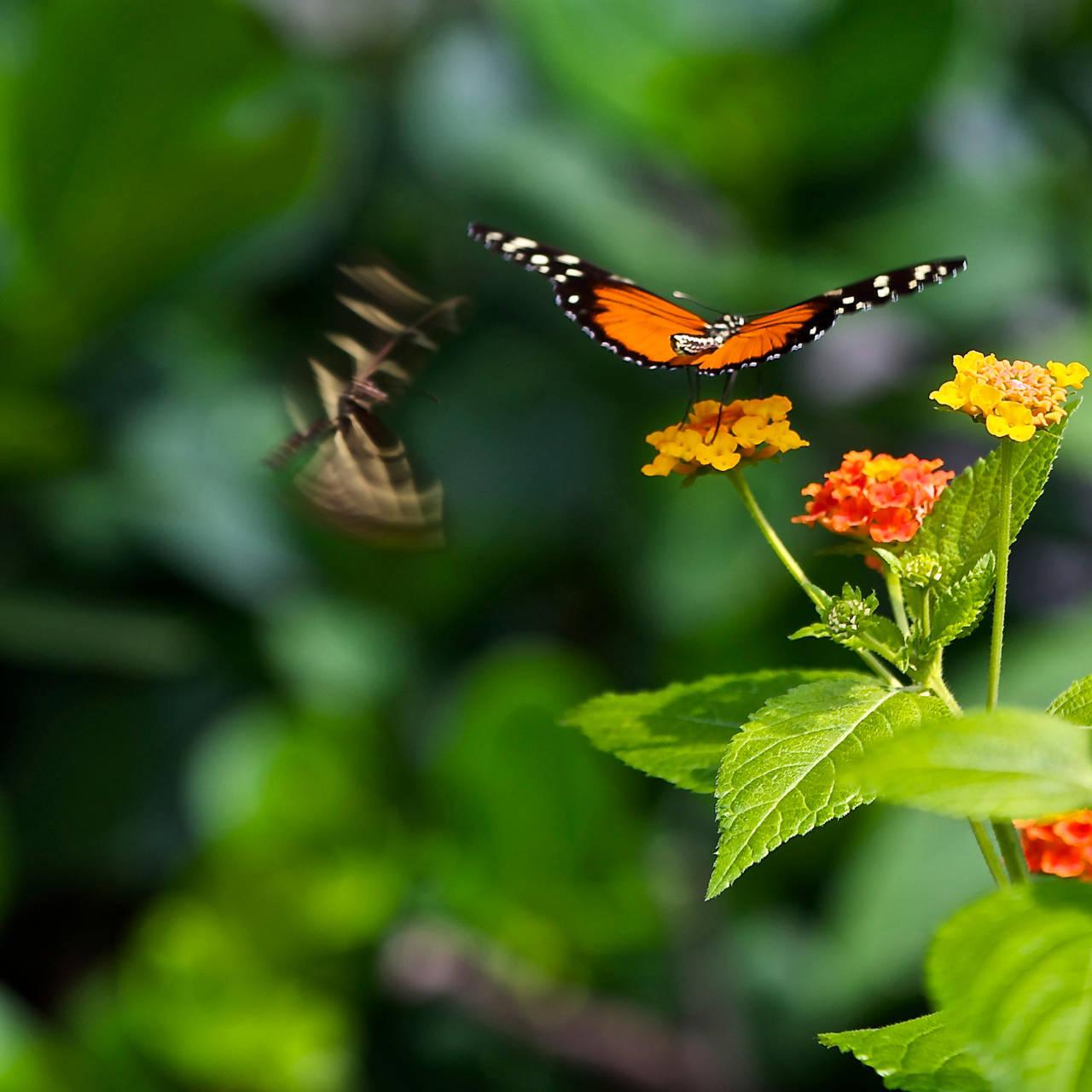 Butterflies by rontz