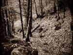 Old forest by Skugenfolk11
