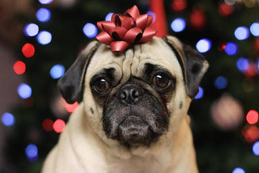 Christmas Pug 2 by garnettrules21