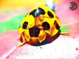 Wounded Lady Bug by iamjasz