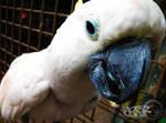 White Parrot by iamjasz