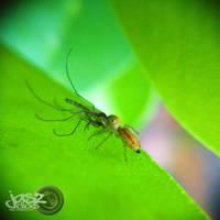 Spider vs Mosquito by iamjasz