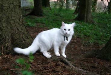 White Cat by Navanna