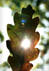 Sunny Leaf by Navanna