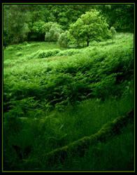 Green by Navanna